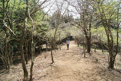 大山稜線散歩.jpg