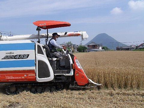 麦畑3 .jpg